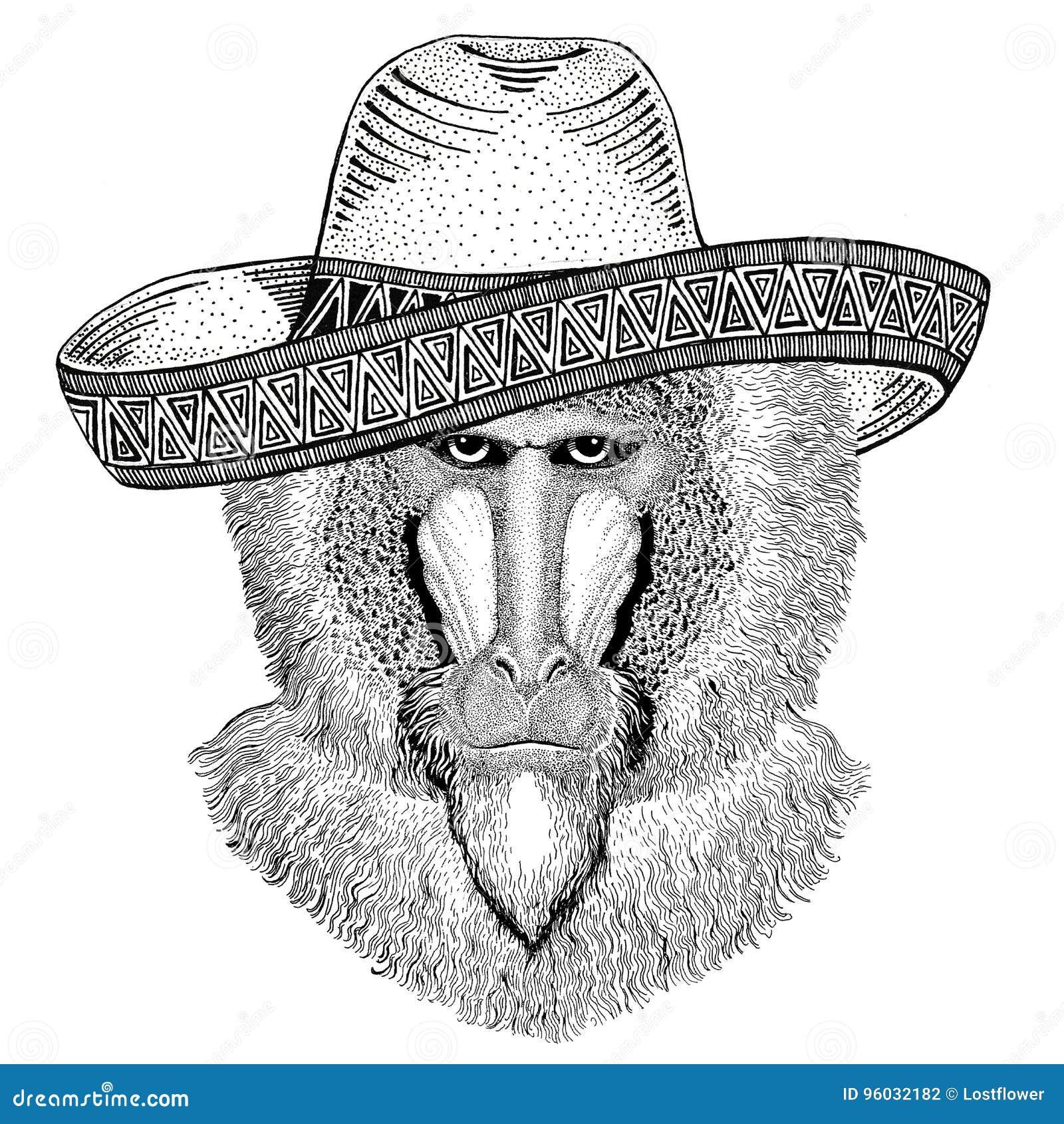 Małpa, pawian, małpa, małpy dzikie zwierzę jest ubranym sombrero Meksyk fiesta meksykanina przyjęcia ilustracyjnego Dzikiego zach