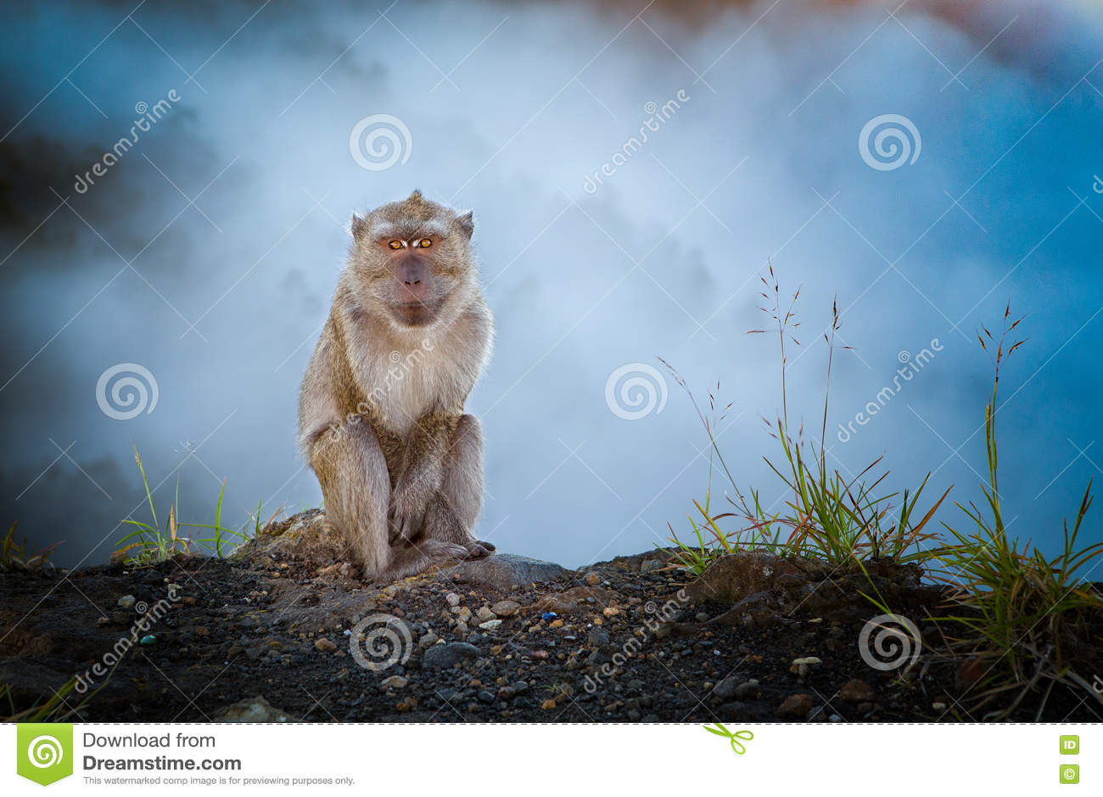 Małpa w mgle