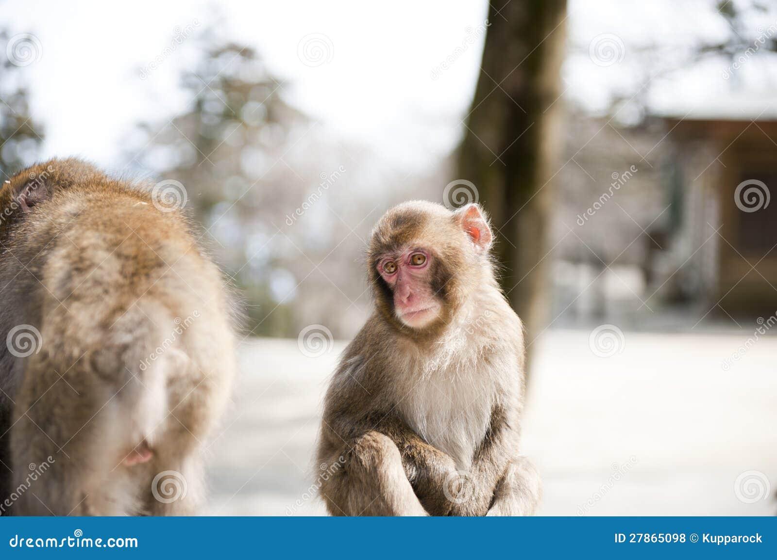 Małpi dziecko