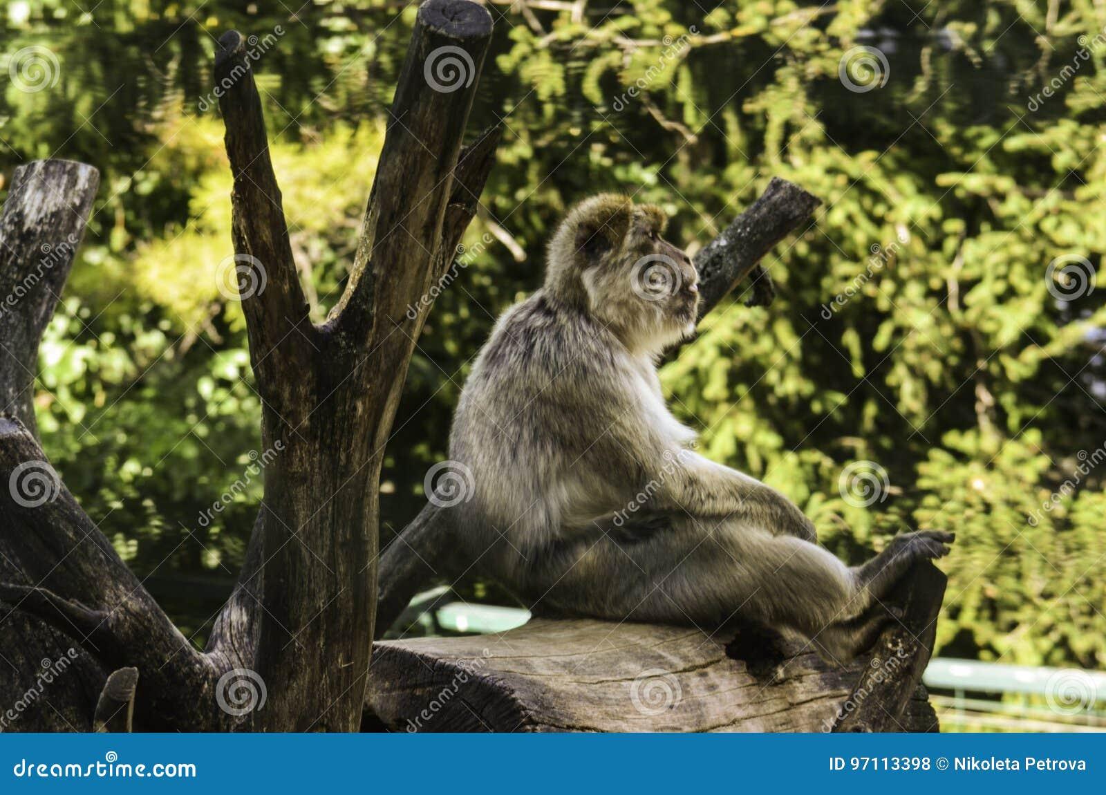 Małpi obsiadanie na fiszorku