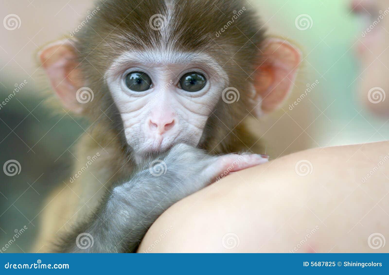 Małpi pet