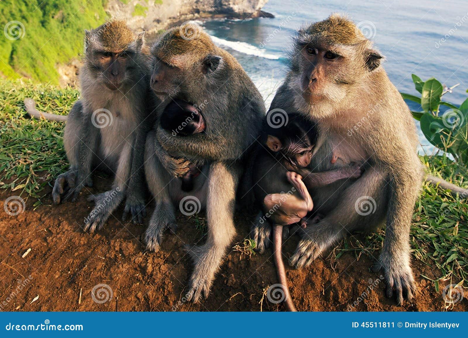 Małpy na falezie
