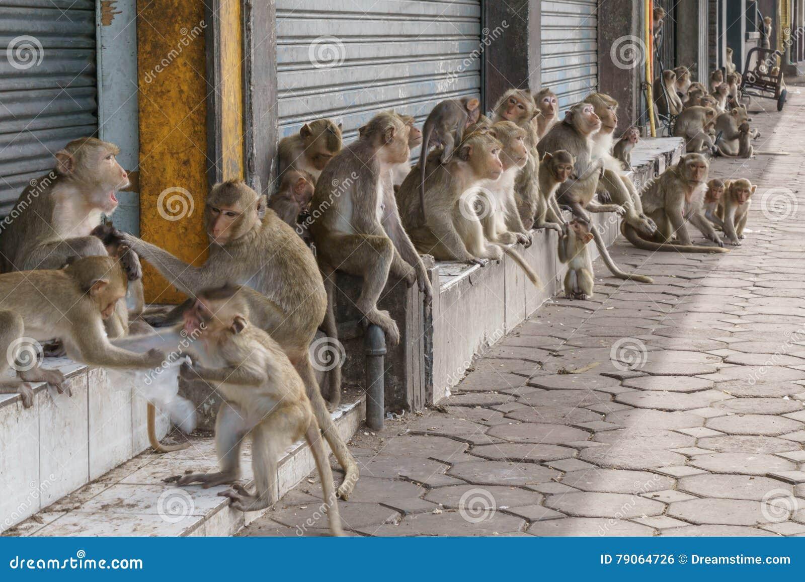 Małpy na ulicie w Tajlandzkim mieście