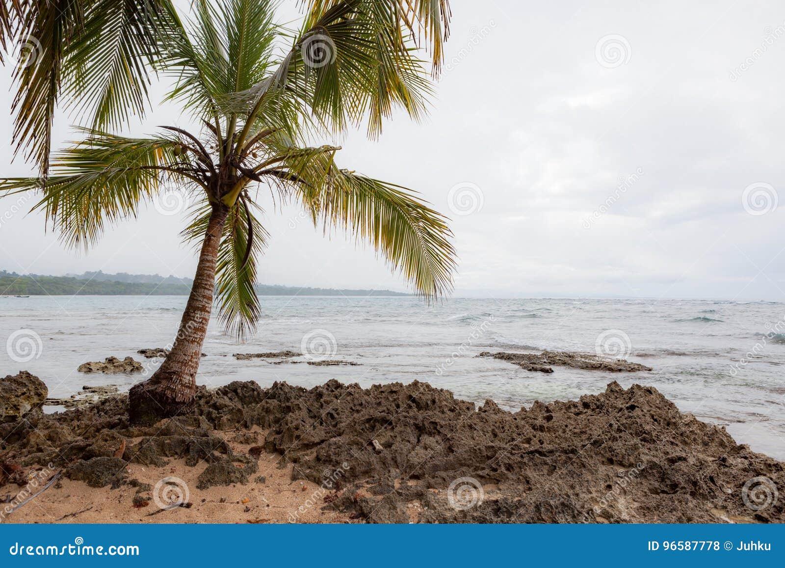 Mały drzewko palmowe w skalistej plaży