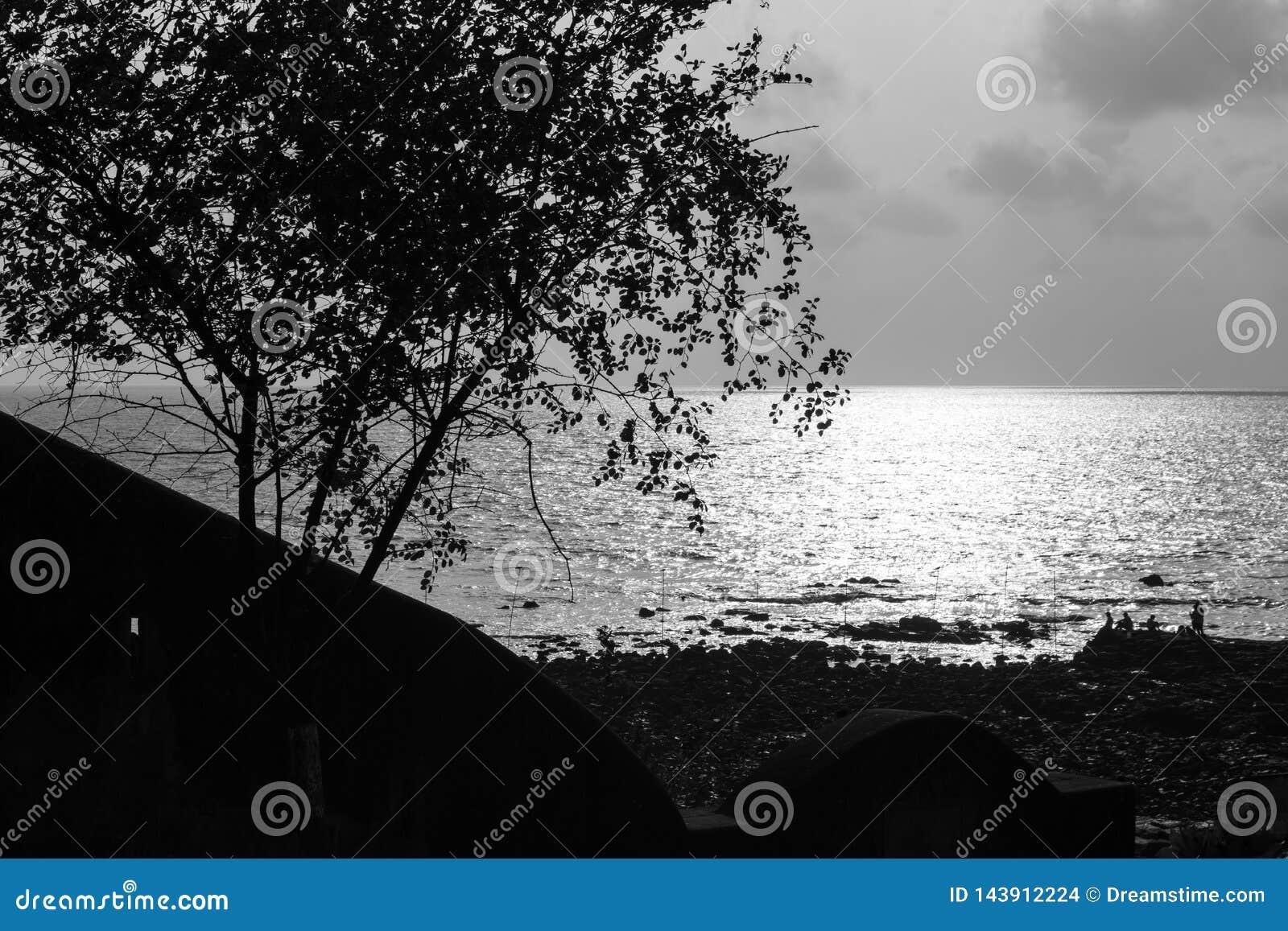 Mały drzewo z cierniami oprócz plaży
