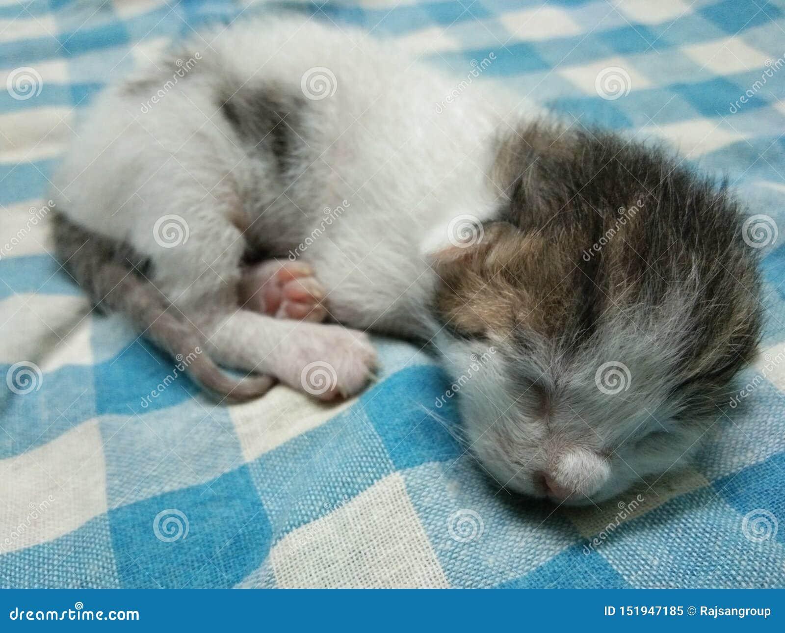 Mały dziecko kota dosypiania obrazek