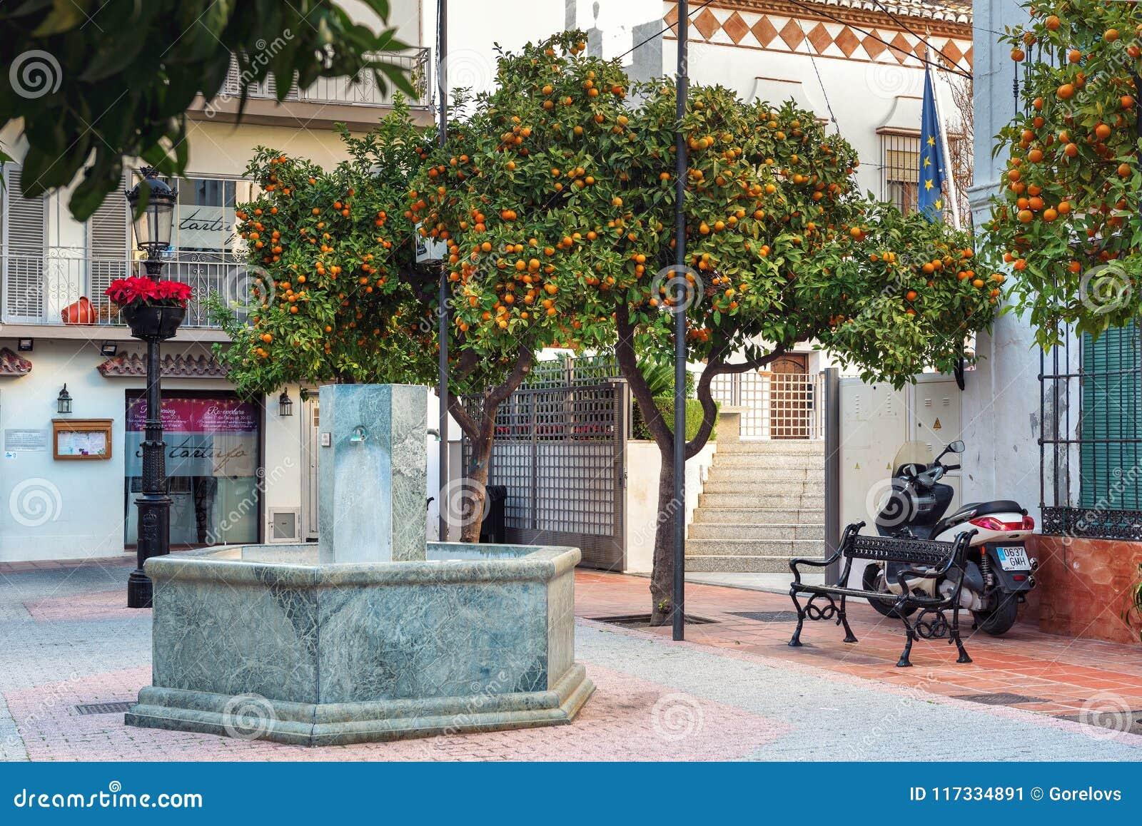 Mały jard z pomarańczowymi cytrusów drzewami w Marbella, Andalusia, Hiszpania