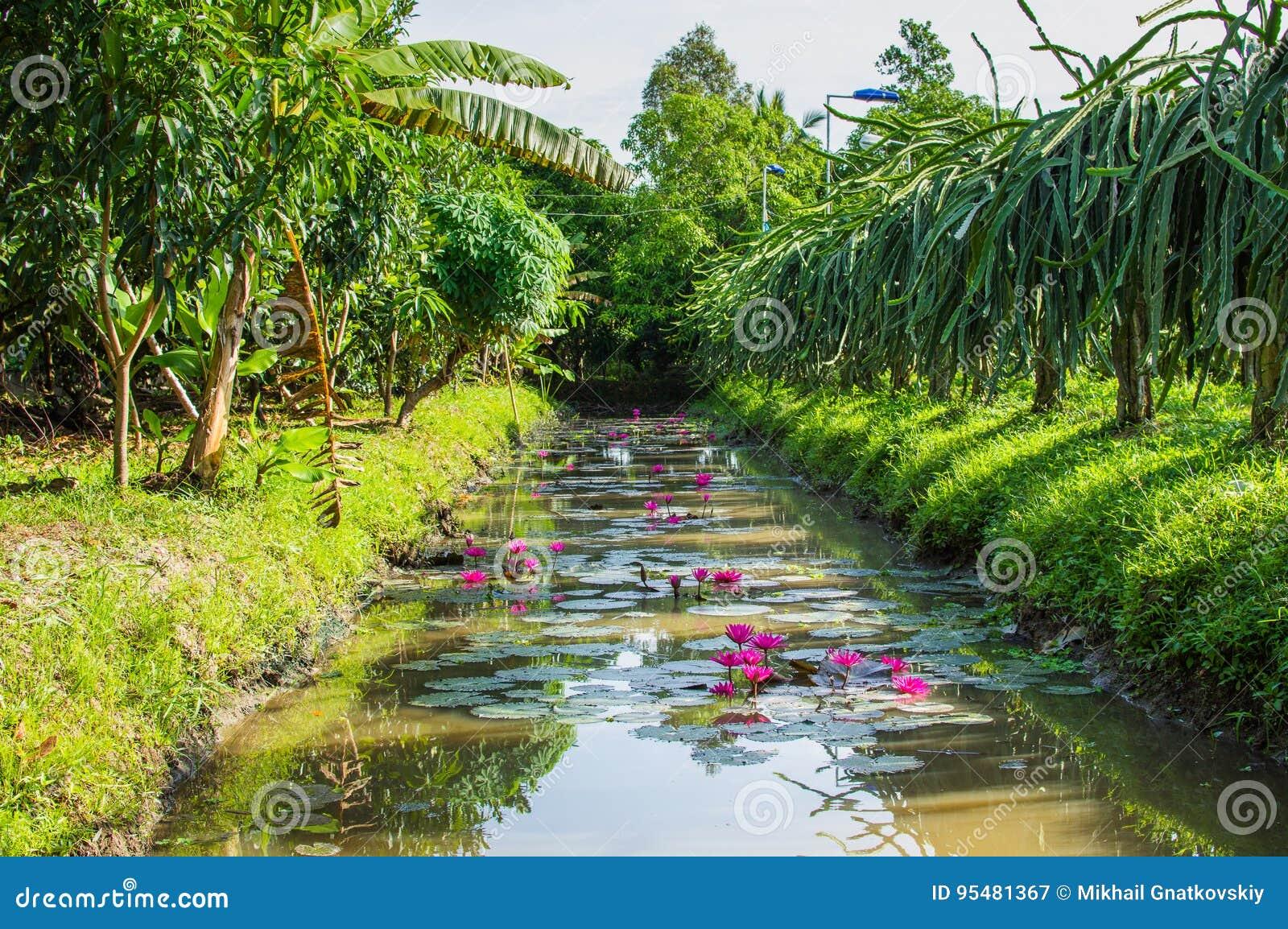 Mały kanał w Mekong delcie