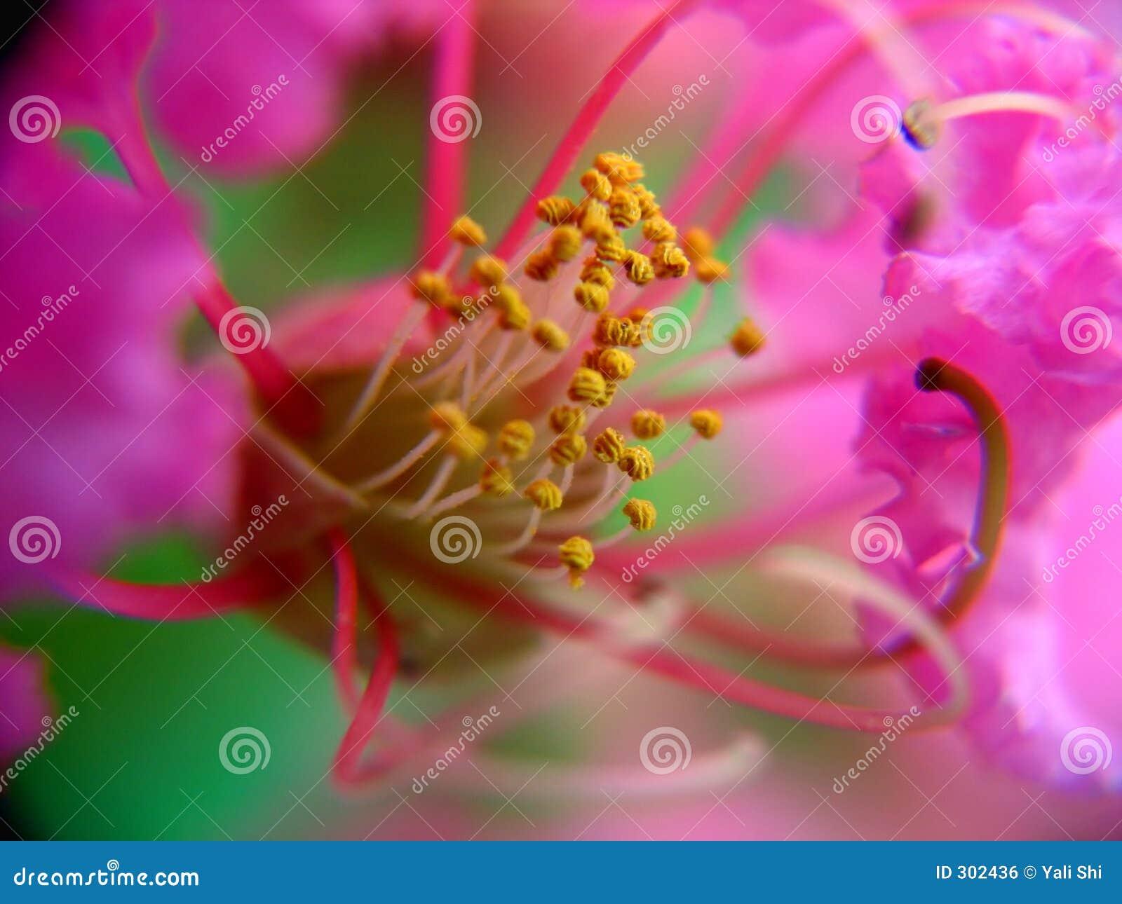 Mały kwiat wewnątrz widok
