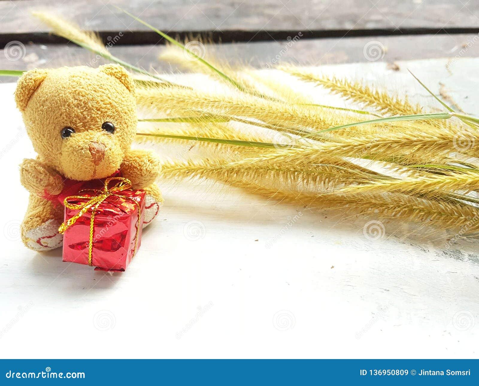Mały niedźwiedź z gife