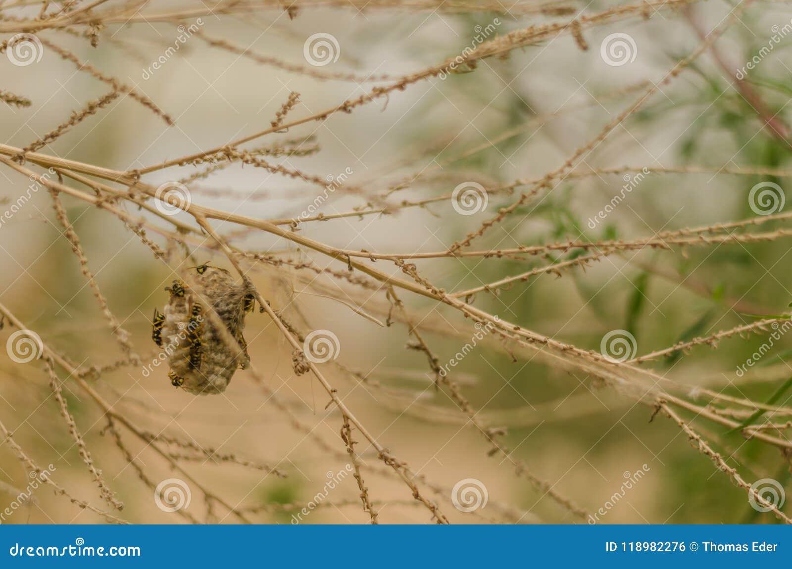 Mały osy gniazdeczko