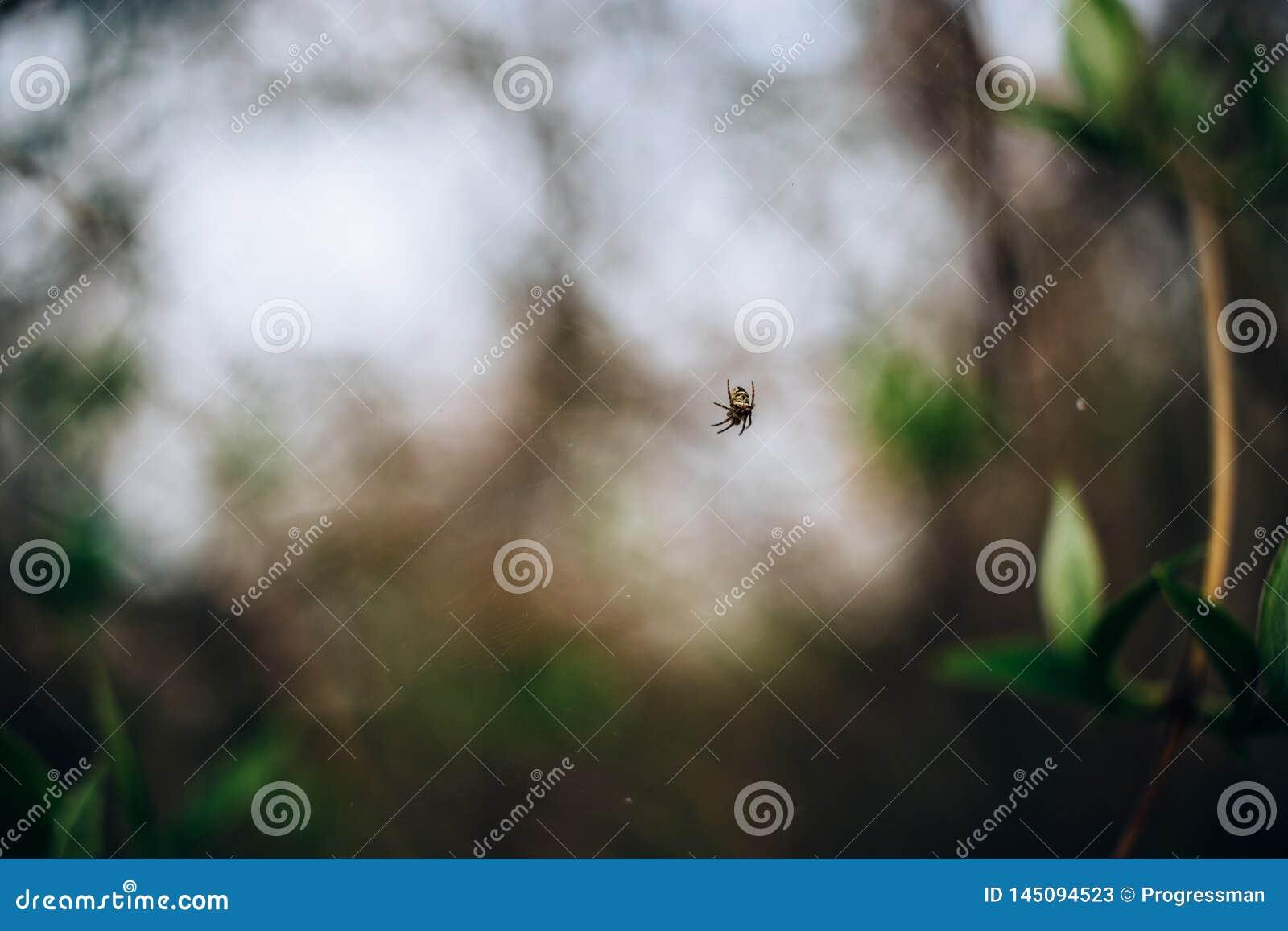 Mały pająk na sieci wśród wiosny ulistnienia
