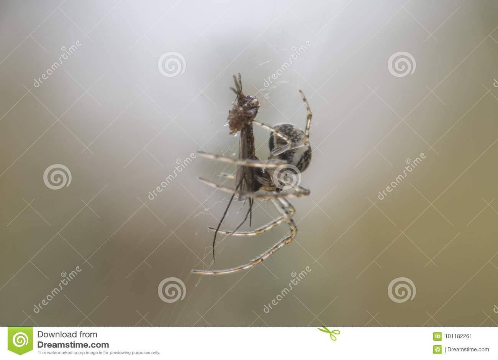Mały pieniądze pająk na sieci