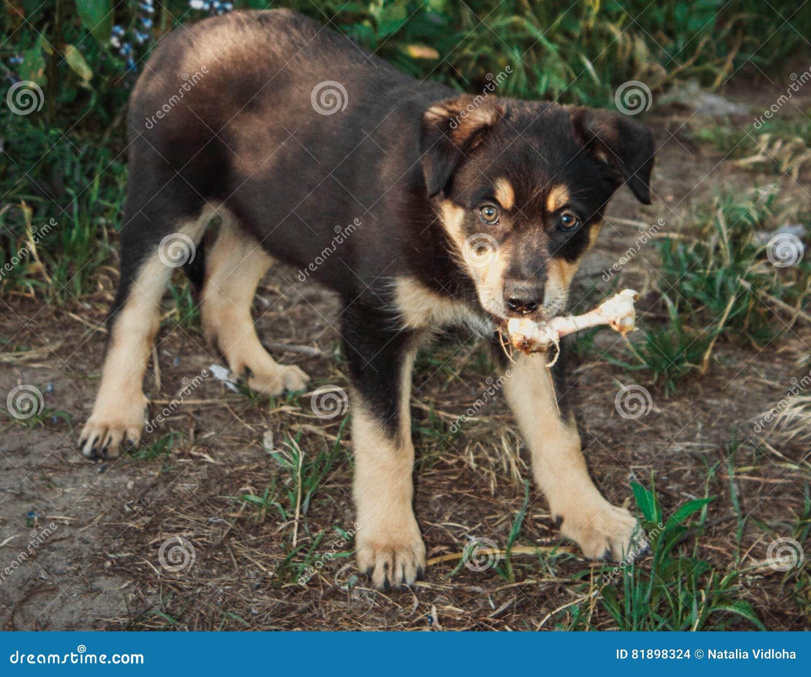 Mały pies
