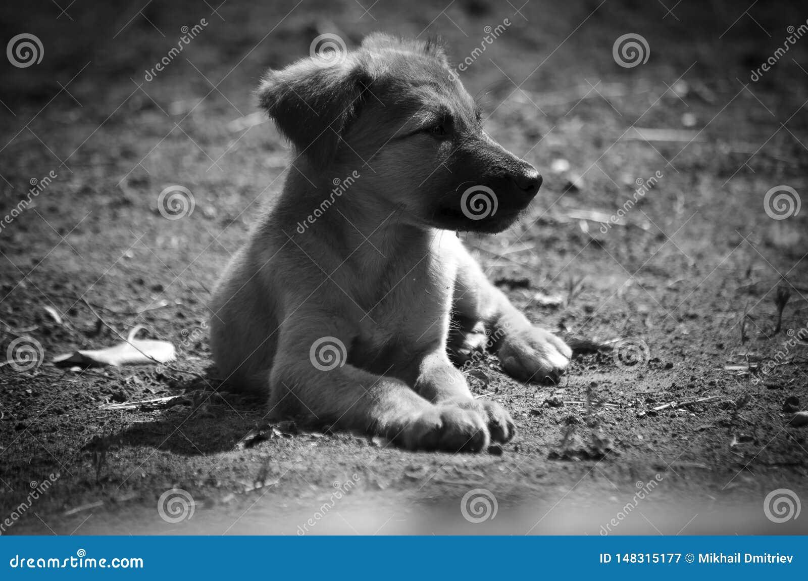 Mały pies dostaje ciepłym od słońce promieni
