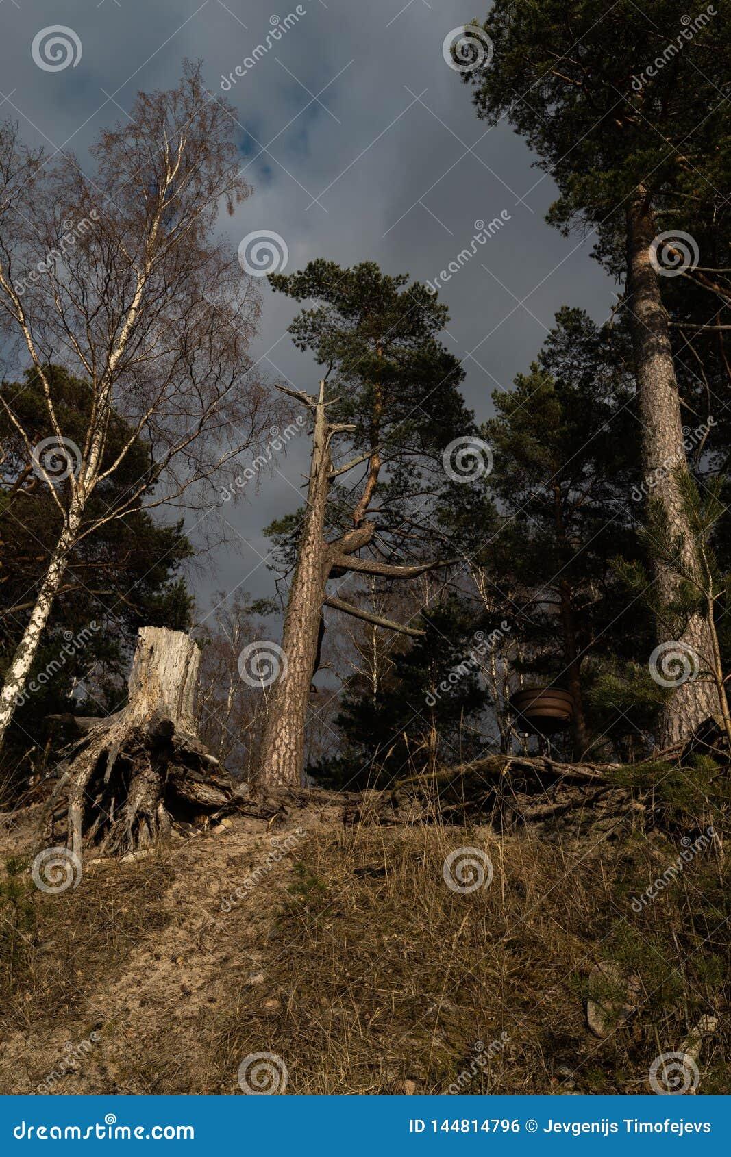 Mały pykniczny miejsce na plaży w lesie na wzgórzu z round bbq grillem i fiszorkiem