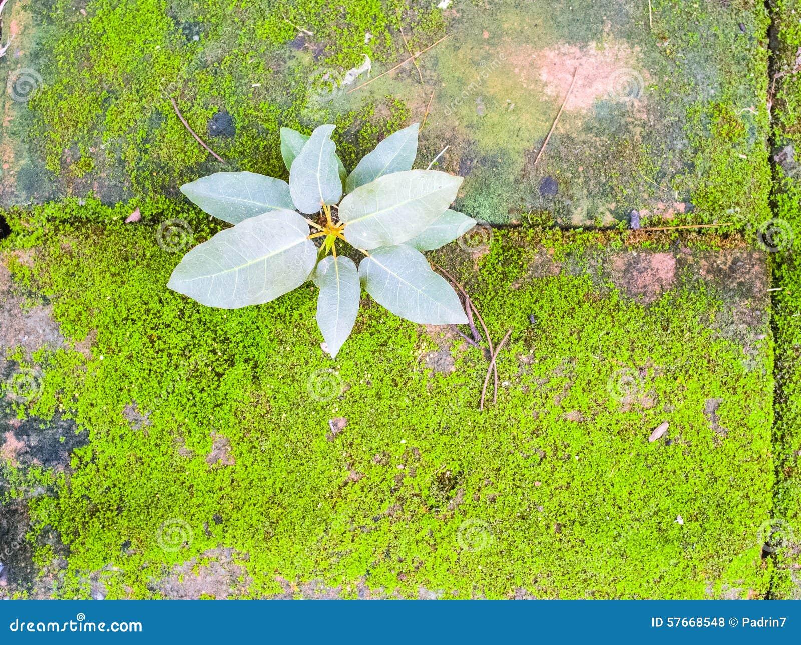 Mały rośliny i mech dorośnięcie na cegle