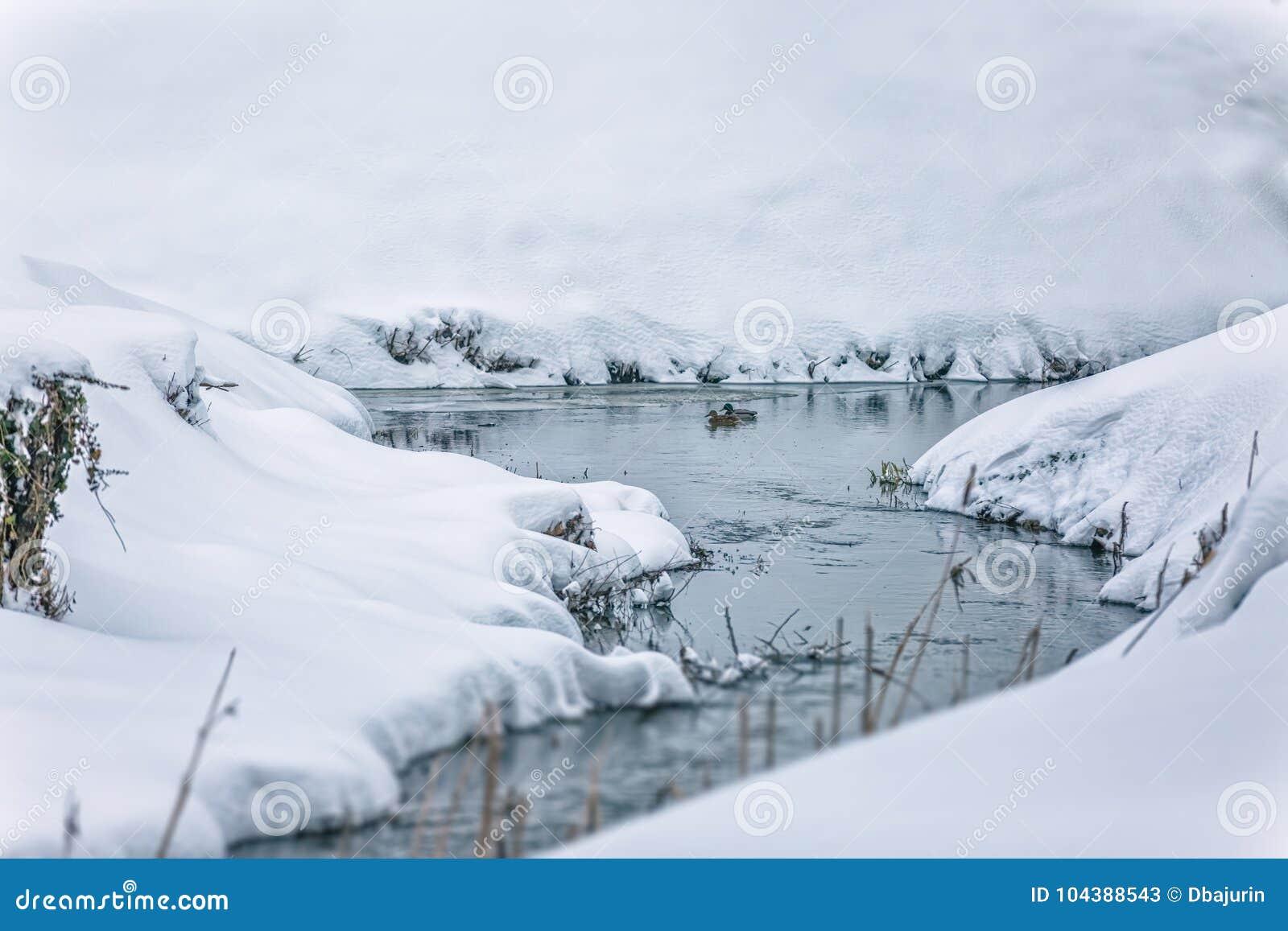 Mały strumień w śniegu