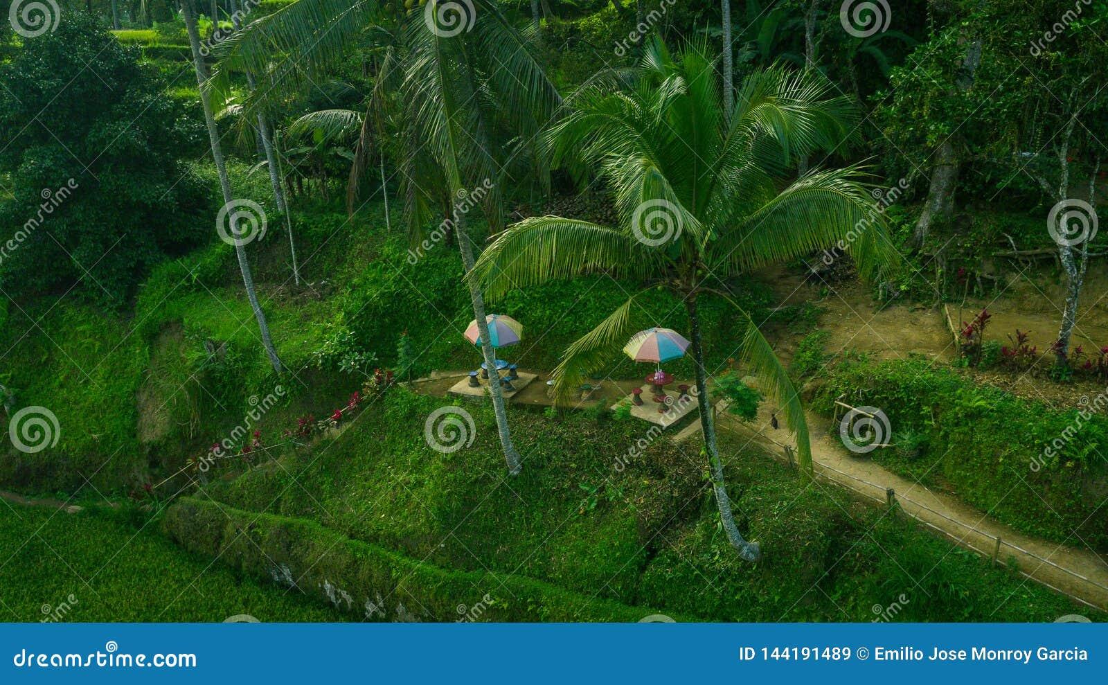 Mały taras relaksować między ryżowymi polami