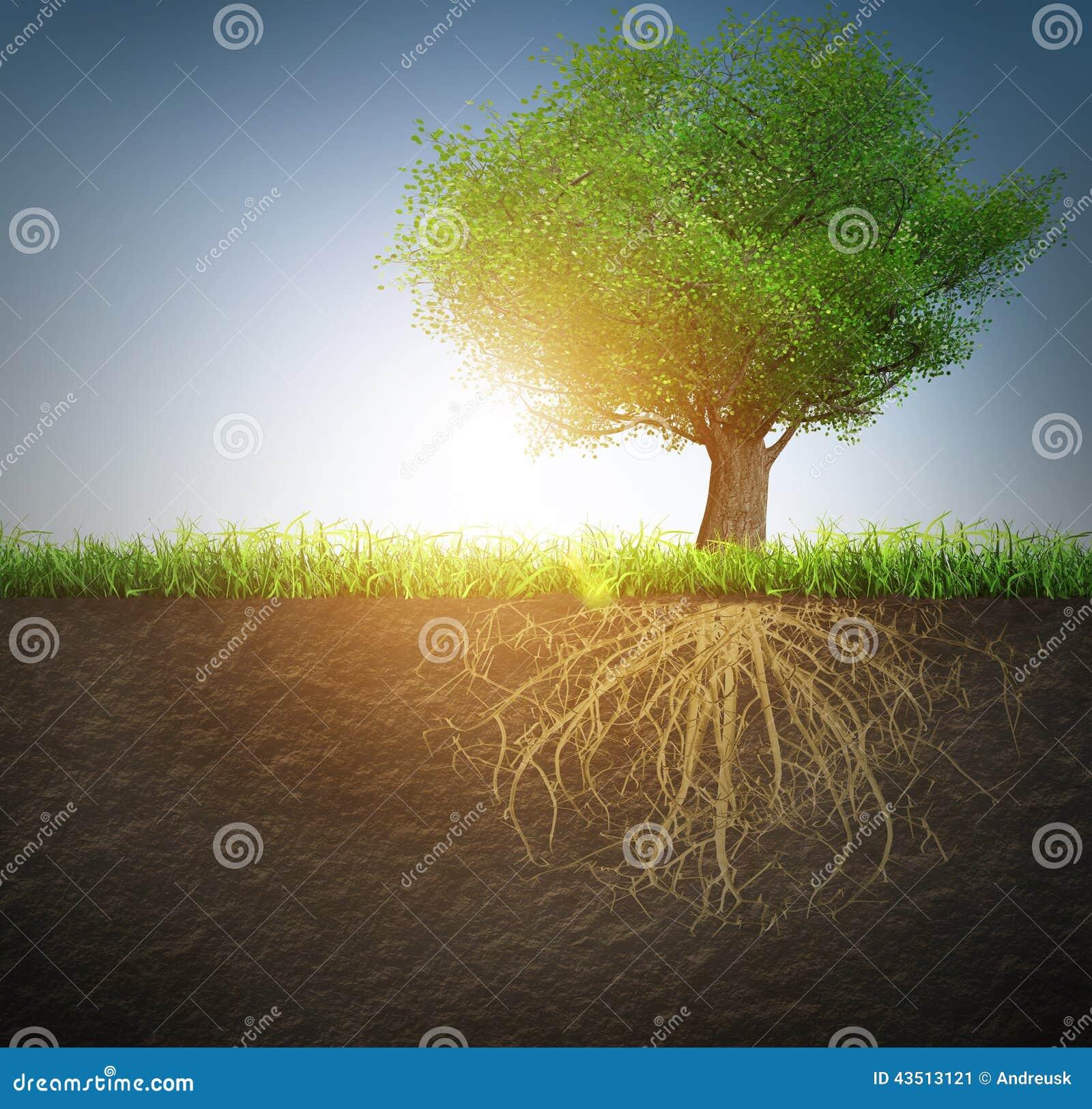 Ma swoje korzenie drzewa