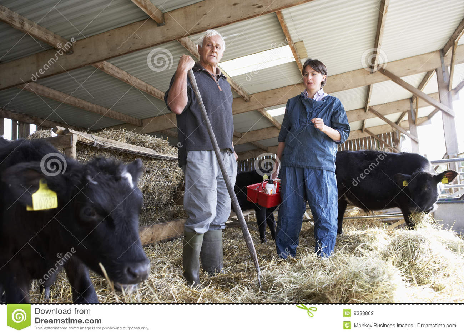 Ma weterynarza dyskusja rolnik