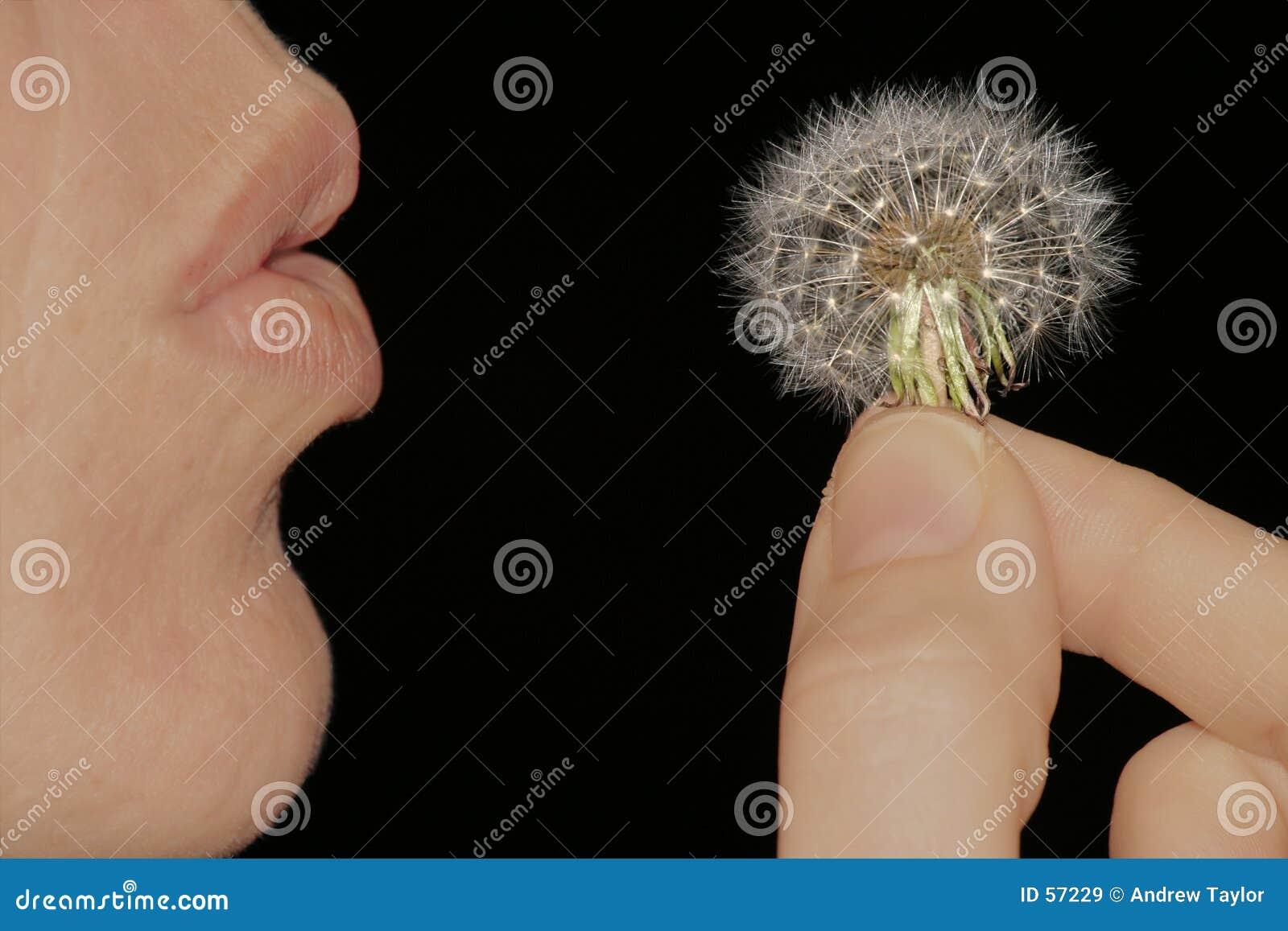 Maak een wens
