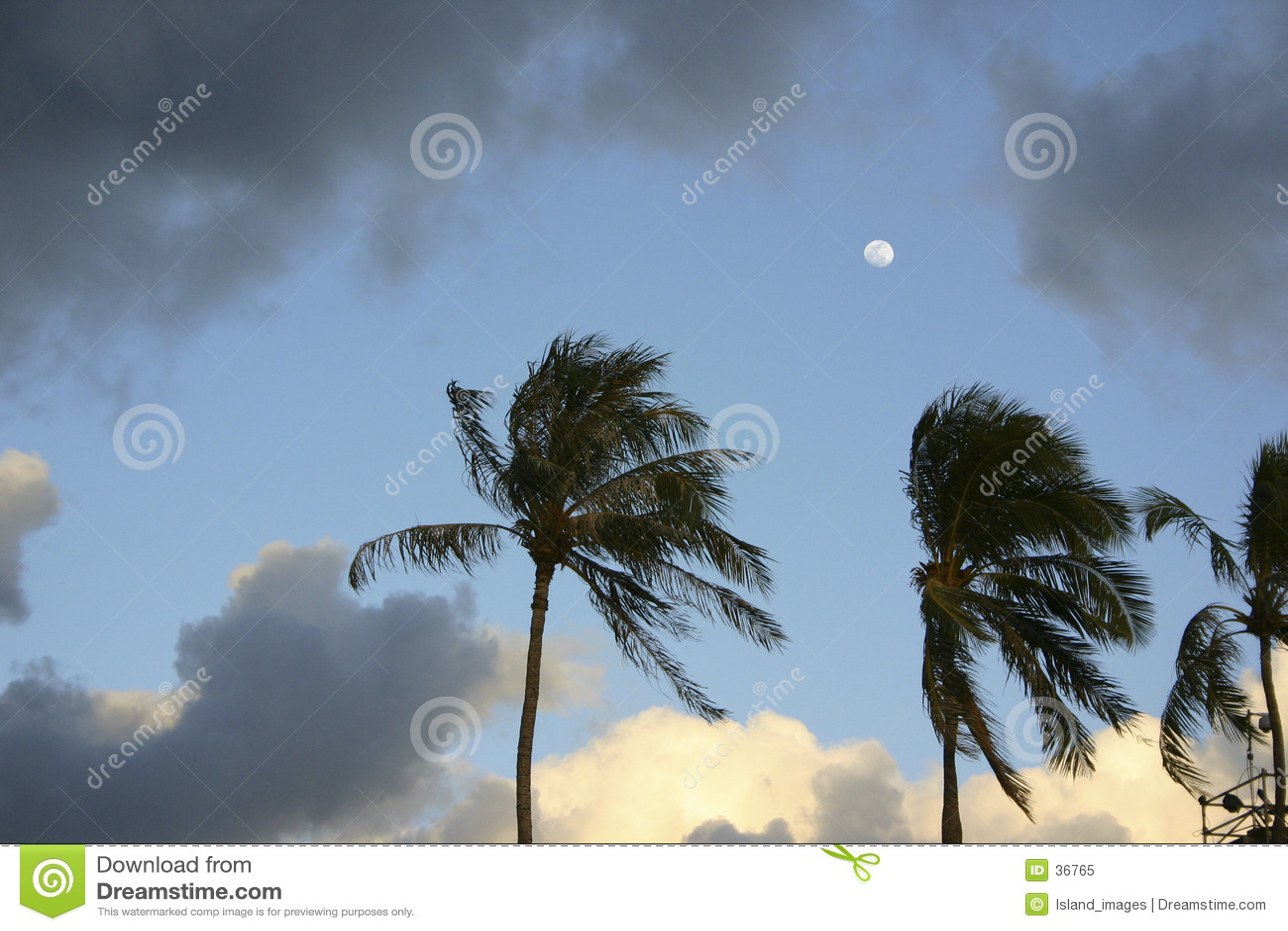 Maan over palmen