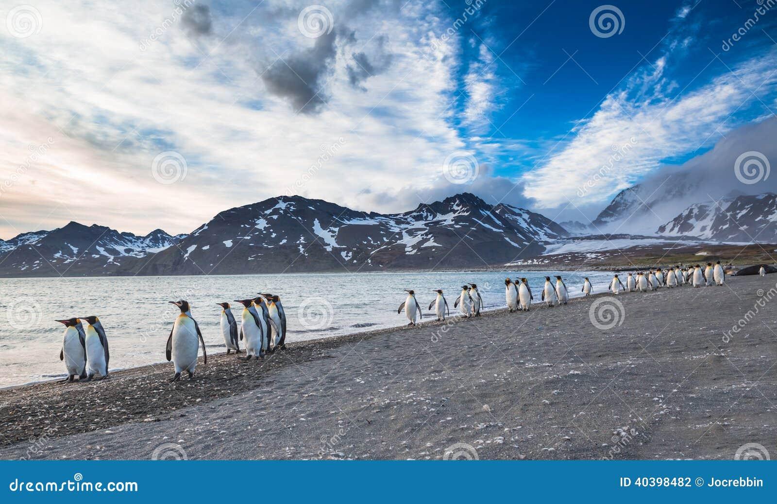Maart van de Koning Penguins