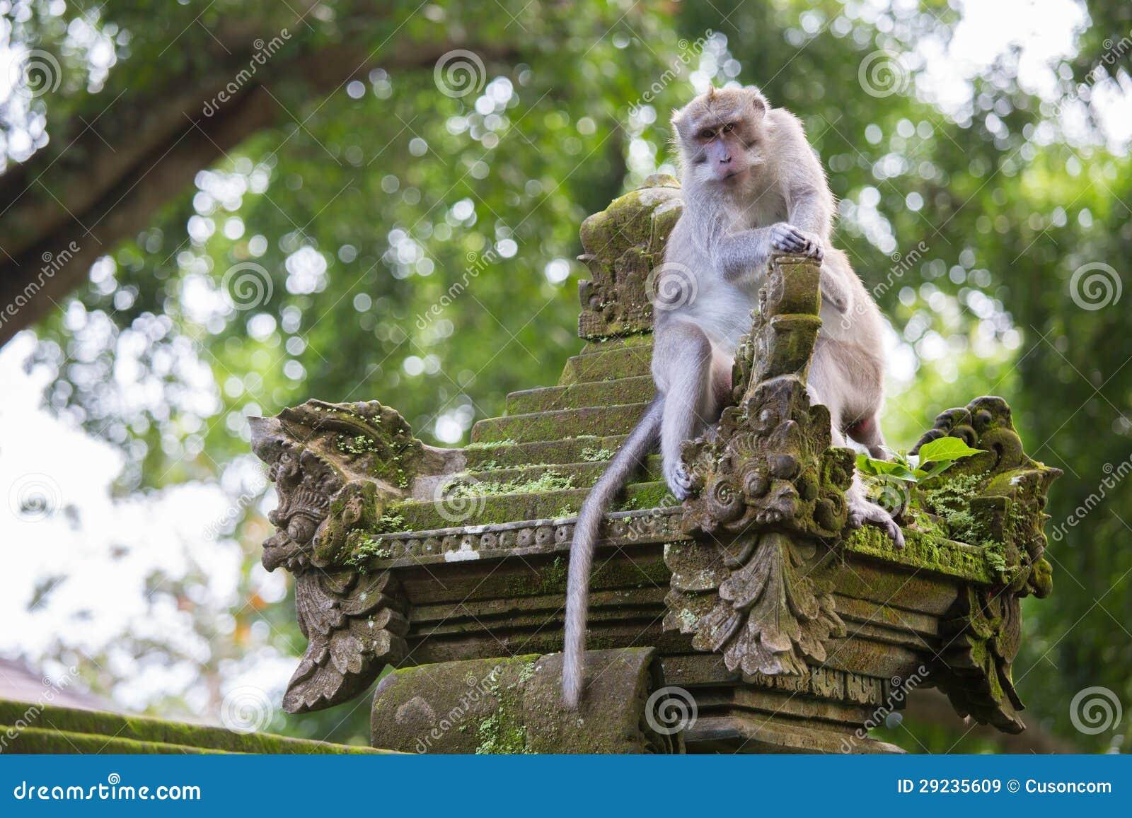 Download Macaco imagem de stock. Imagem de macaque, cuidado, nave - 29235609
