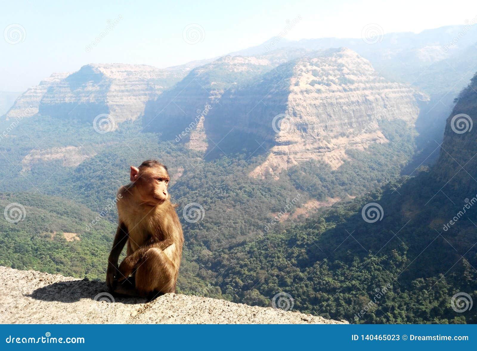 Macaco com fundo da paisagem da montanha