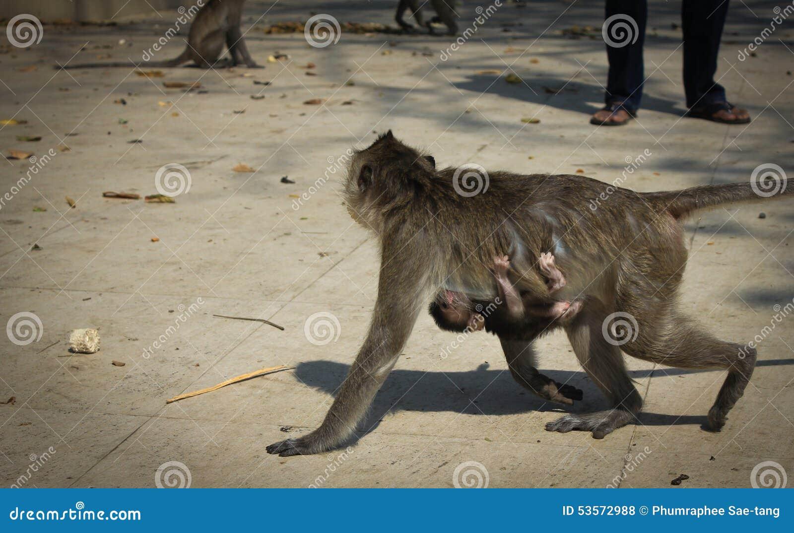 Macaco com um bebê