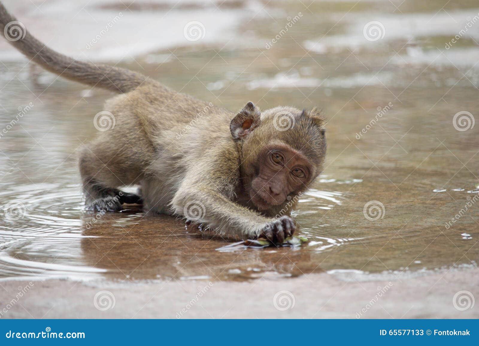 Macacos bonitos