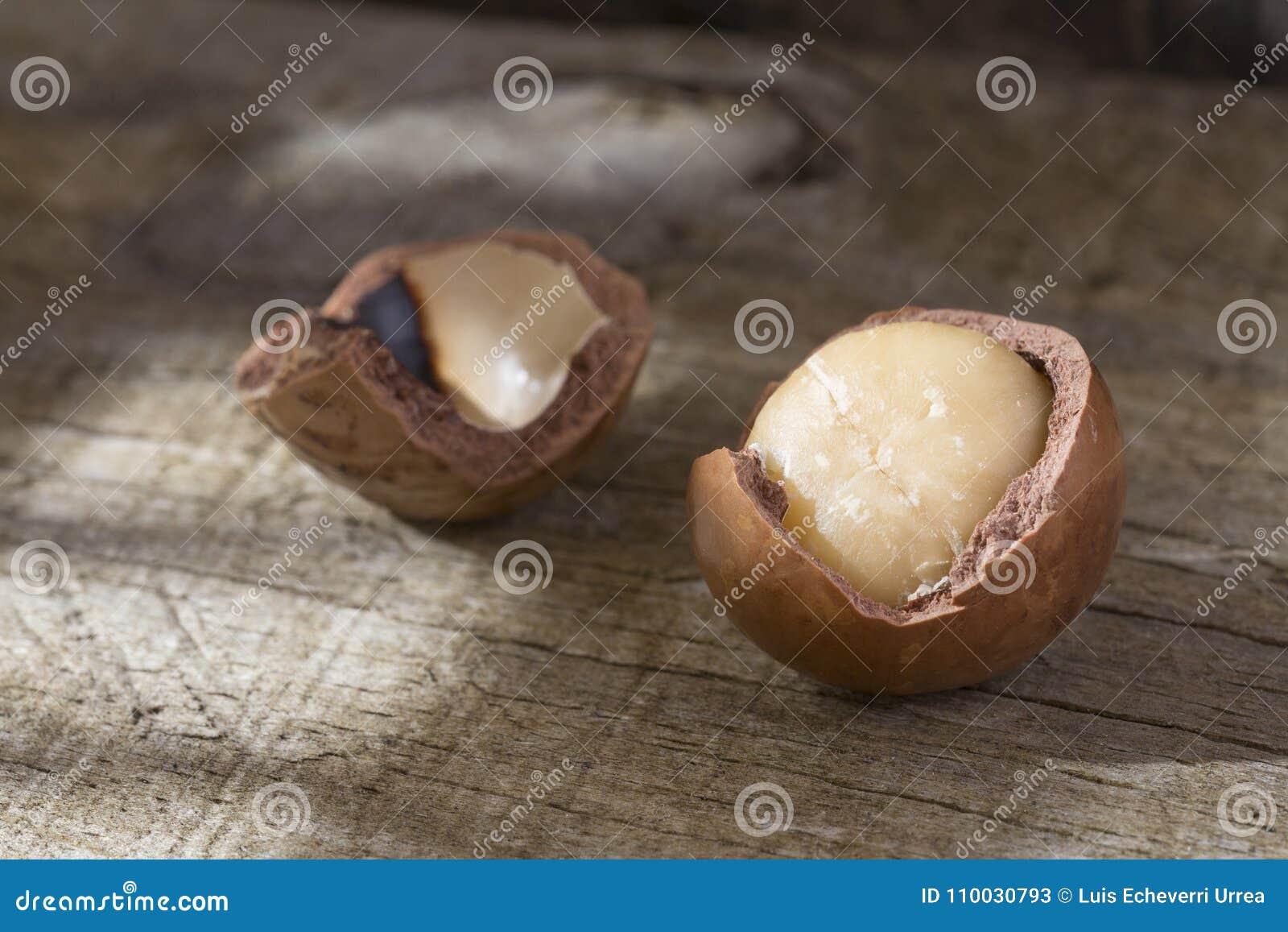 Macadamia noten - Macadamia integrifolia