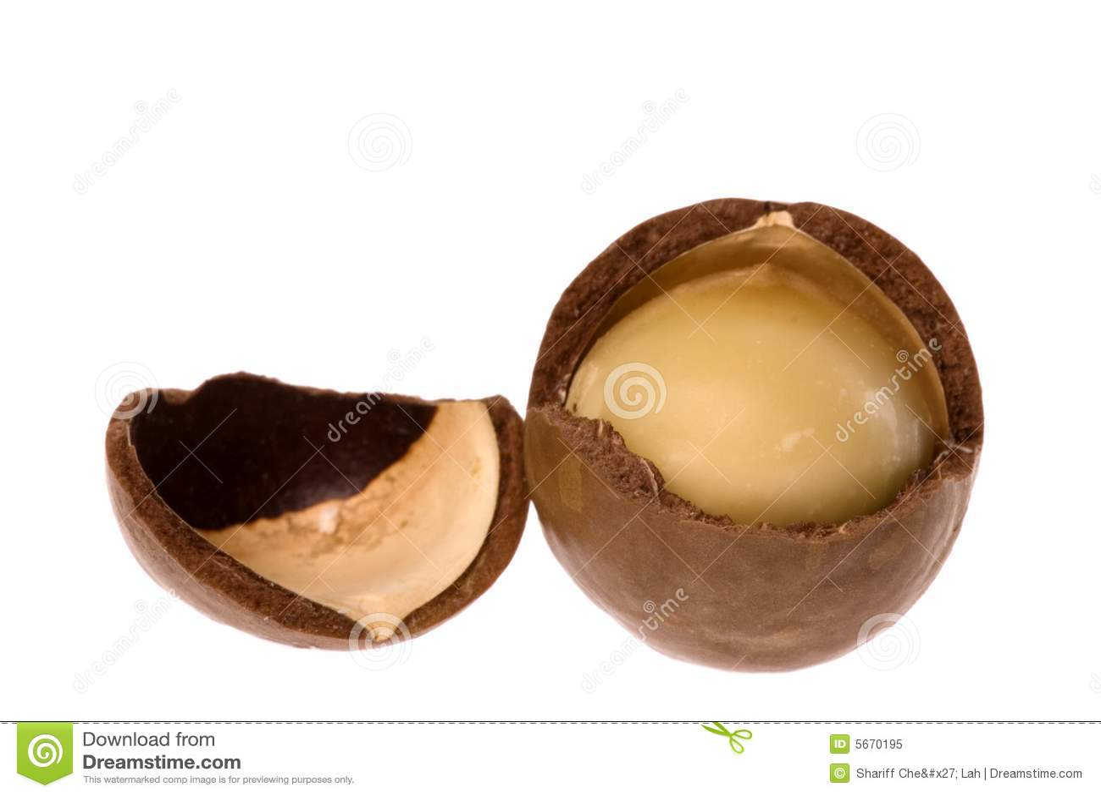 Macadamia nut makro