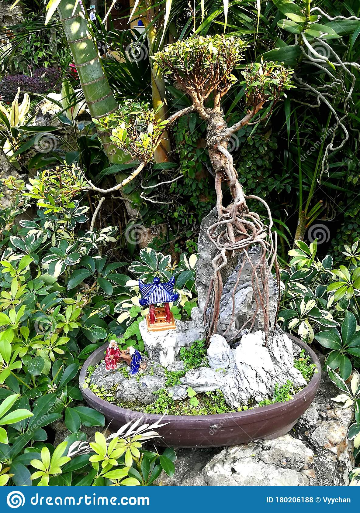 2020 Macao Chinese Garden Bonsai Miniature Tree Pot Plant Blooms Blooming Lou Lim Ieoc Garden Spring Blossom Display Spring Summer Editorial Stock Photo Image Of Garden Beauty 180206188