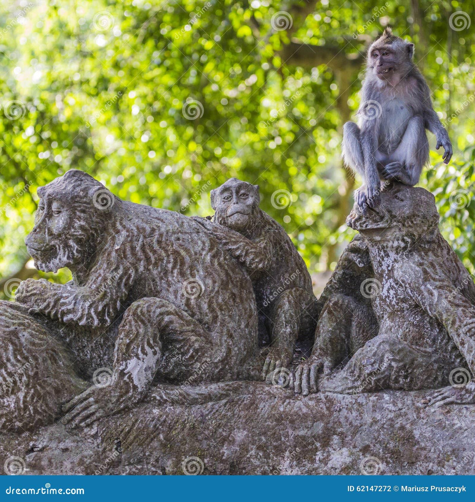 Macaque de cola larga (fascicularis del Macaca) en bosque sagrado del mono