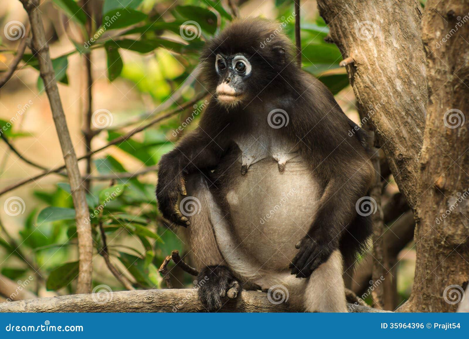Macaque de la madre