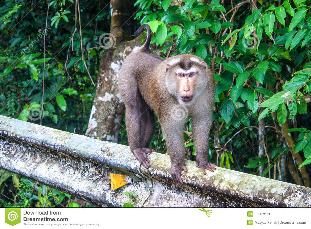 ... At Khao Yai National Park Royalty Free Stock Images - Image: 35207279