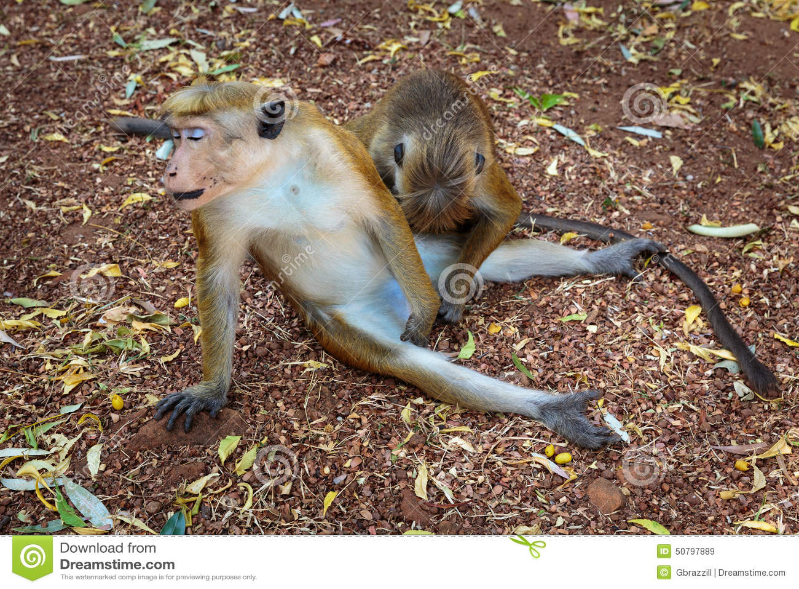 monkey free sex videos