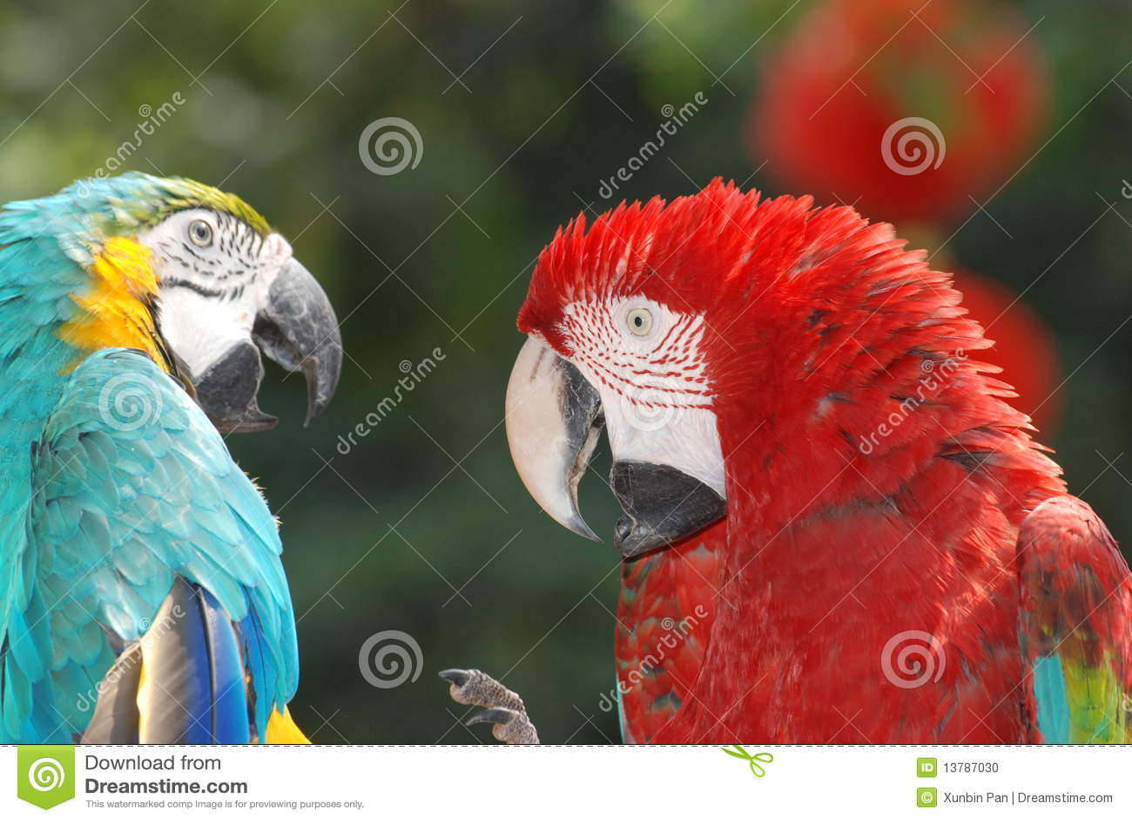 Macaw птиц