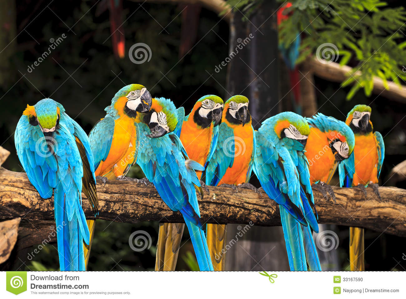 Group of colorful macaw birds   Group Of Colorful Birds