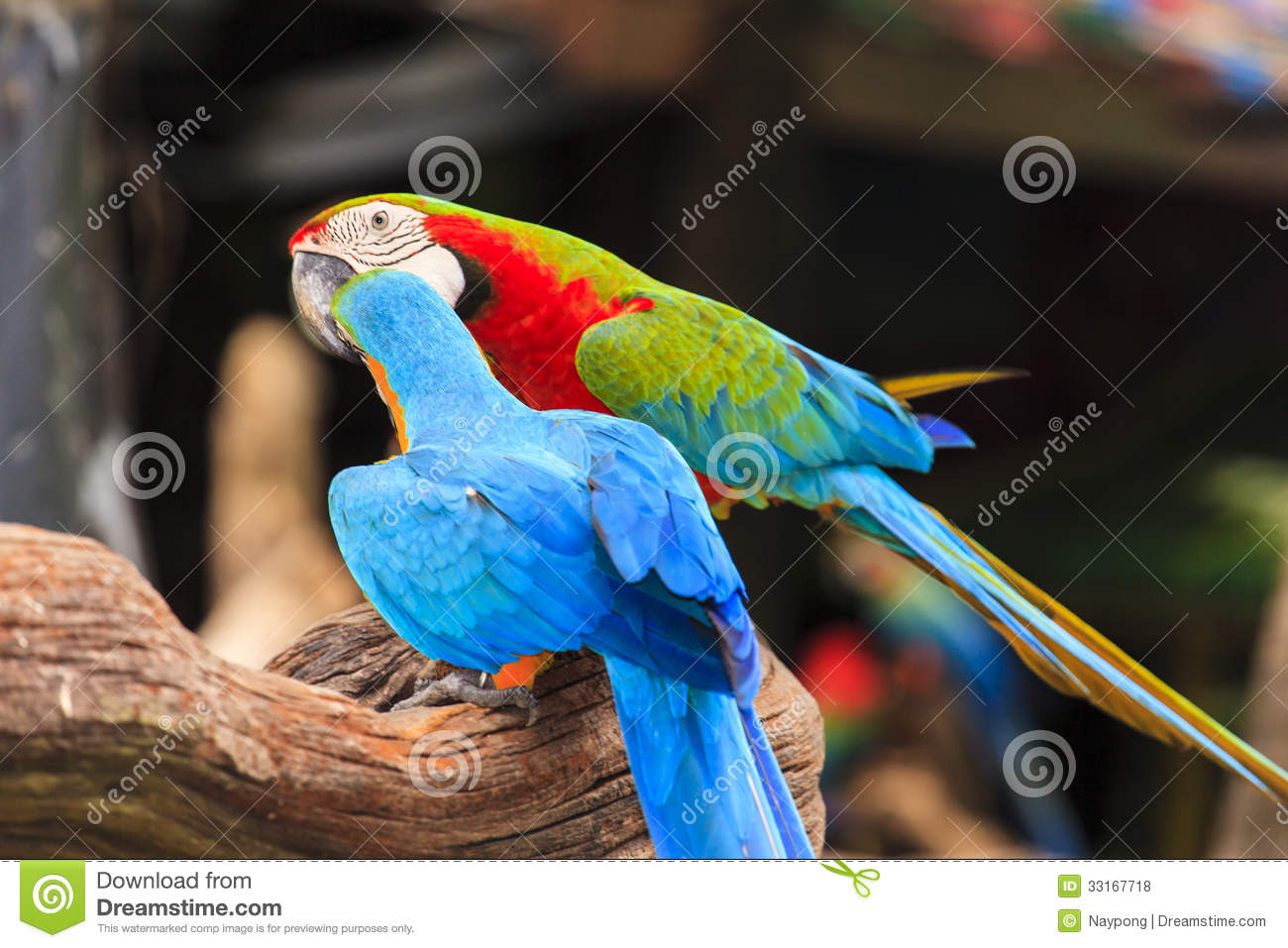 Group of colorful macaw birds. Group Of Colorful Birds