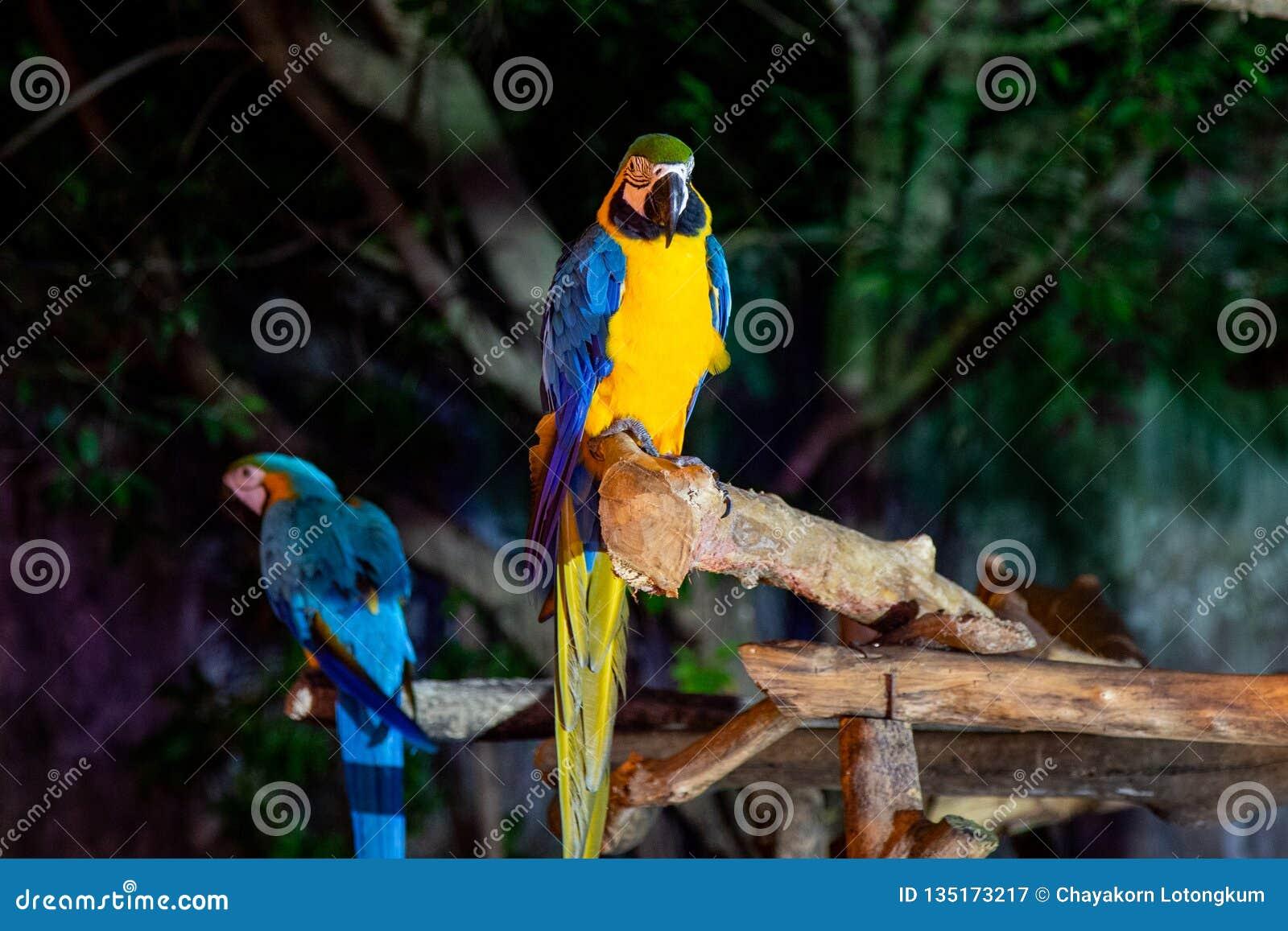Macaw dos en Chiang Mai Night Safari