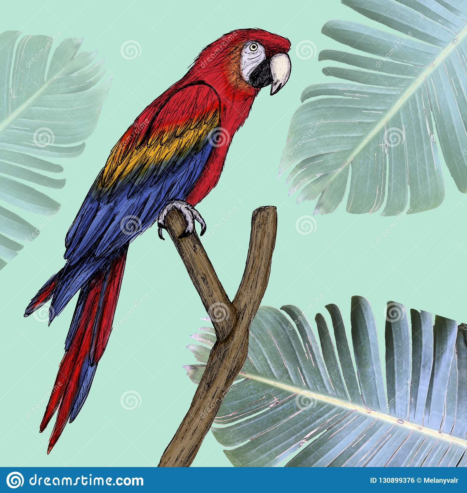 Macaw illustration drawn in pen with digital color