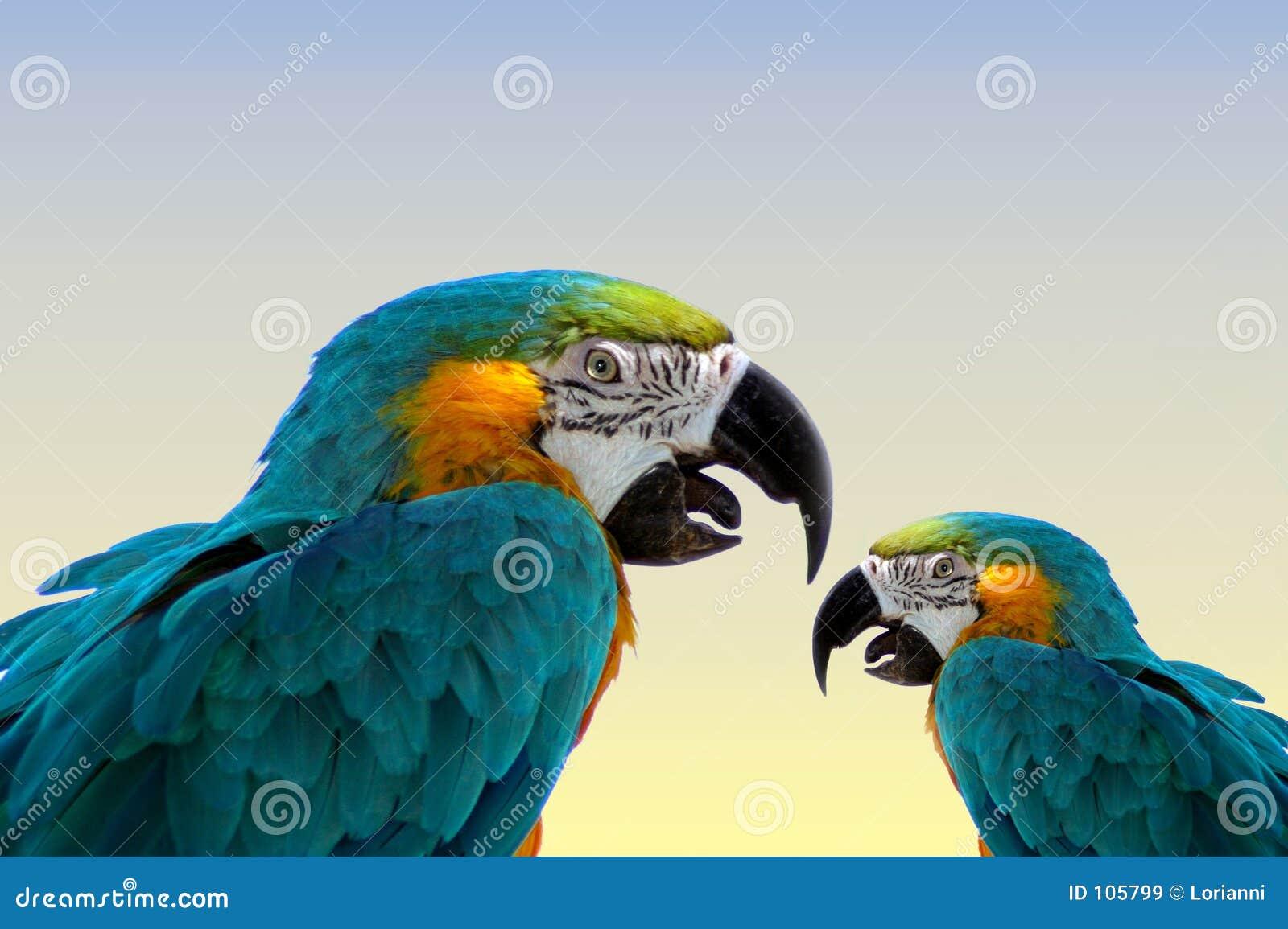 Macaw parrots такие же