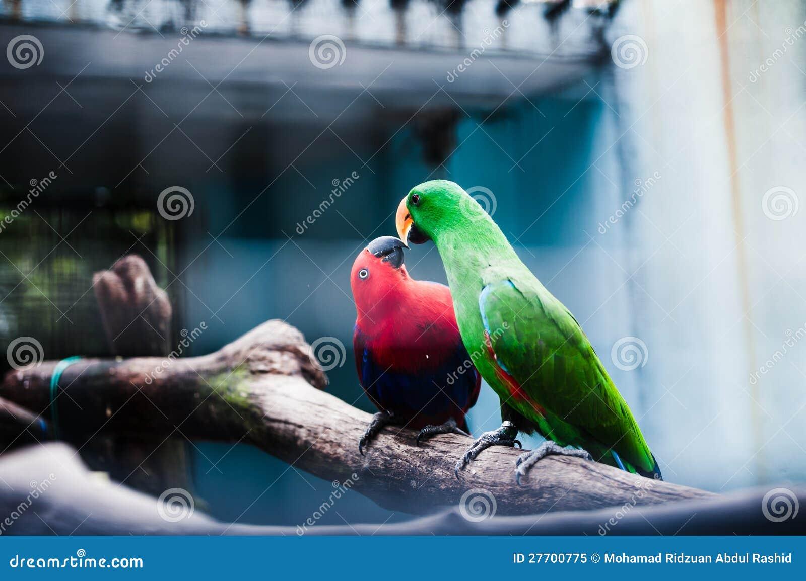Macaw-Vögel