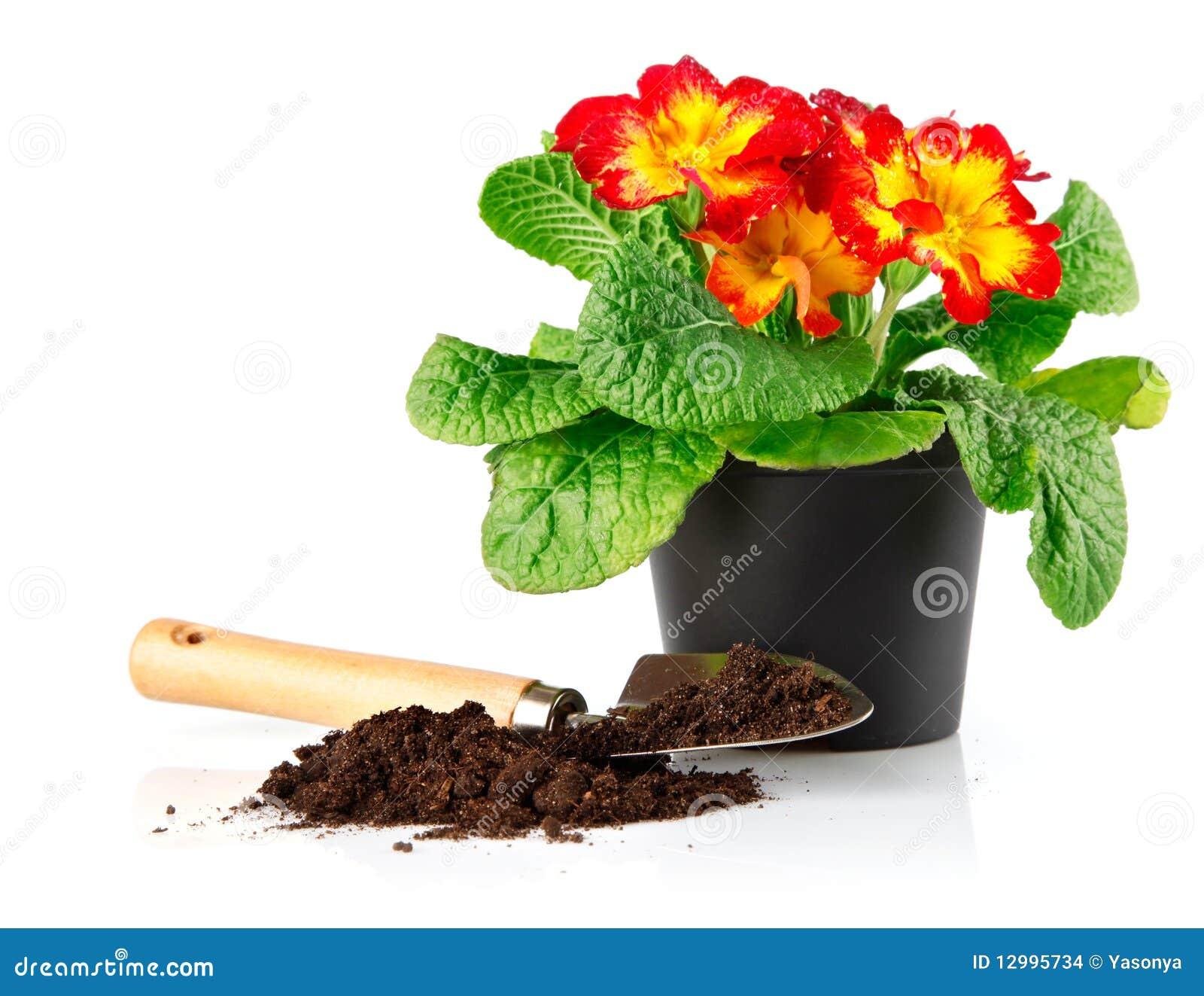 Maceta con las flores rojas y suelo en pala foto de for Fotos de plantas en macetas