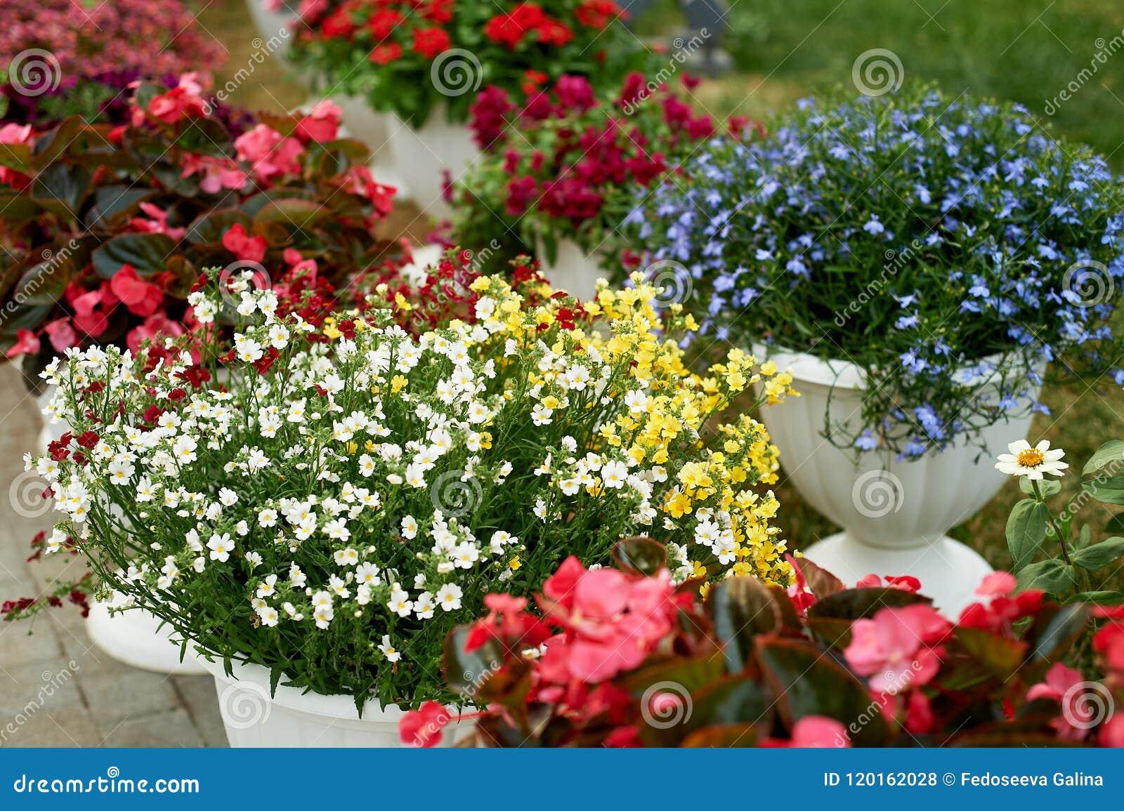 Macetas Blancas Con Las Flores Al Aire Libre La Decoración