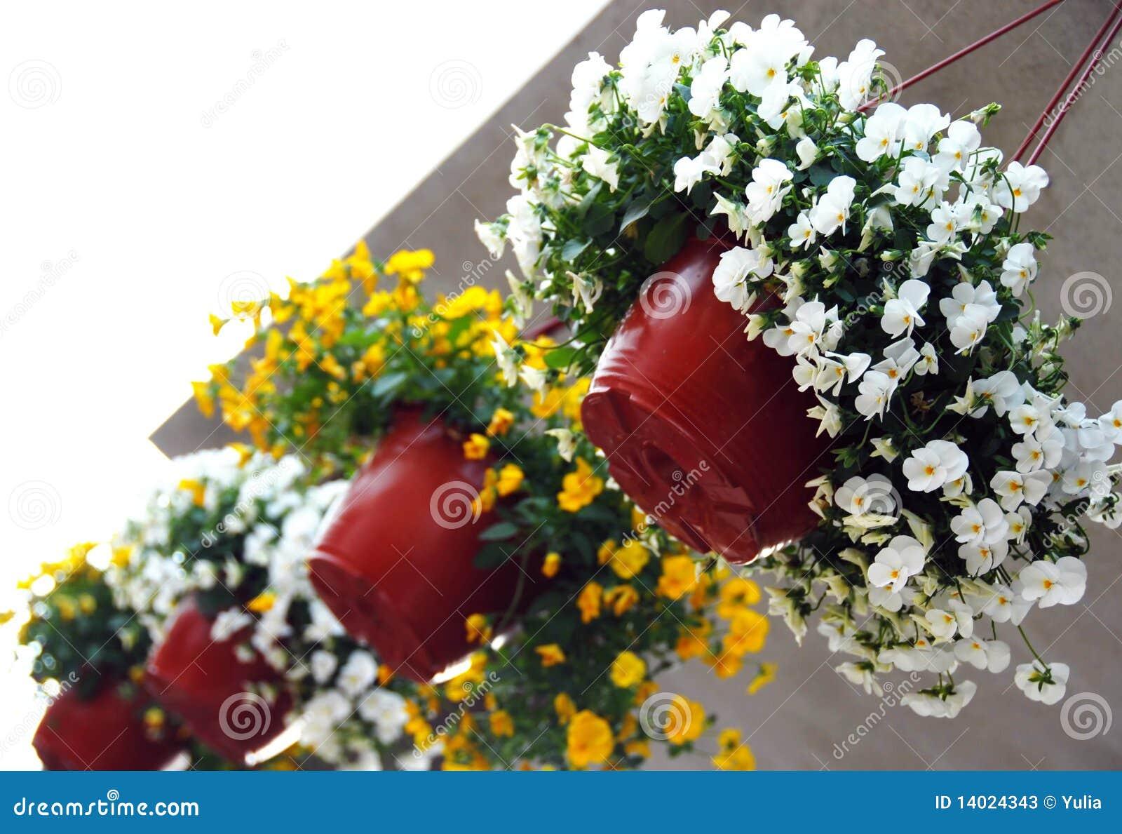 Macetas colgantes con la viola fotos de archivo imagen for Arreglos de jardines con macetas