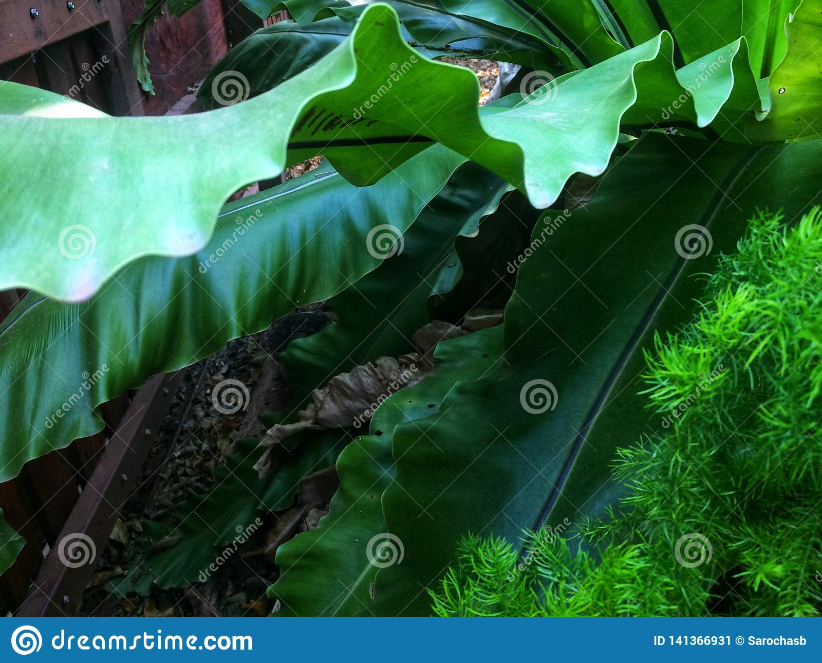 Machać świeżych zielonych liście